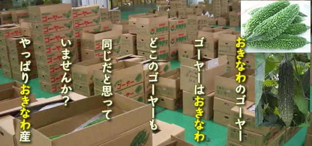 沖縄 ゴーヤー販売