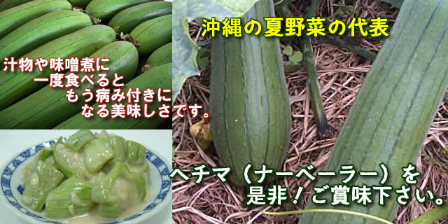 沖縄 ヘチマ(ナーベーラー)販売