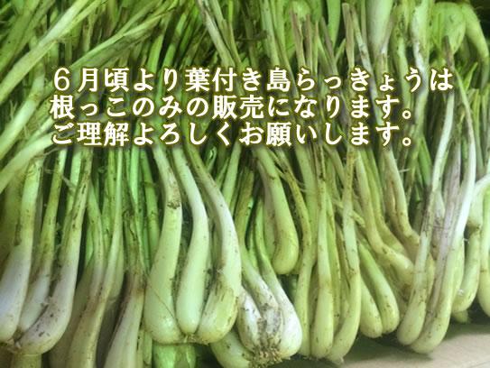 沖縄島らっきょう販売