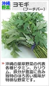 沖縄ヨモギ